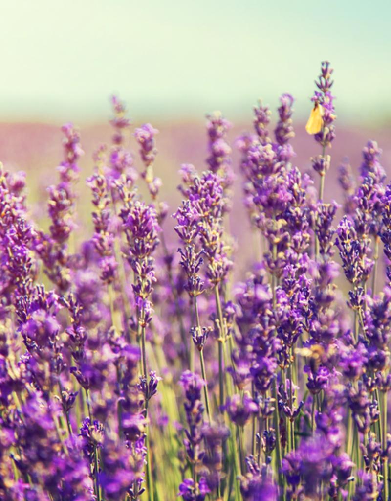 ELIXR Naturreines ätherisches Öl  - Lavender