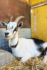 Lebenshof Tiermensch Spende für die Tiere