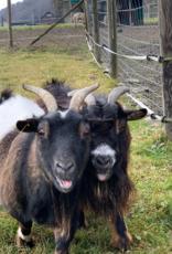 Lebenshof Tiermensch Futtersack für die Zwergziege Zilla