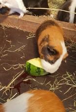 Lebenshof Tiermensch Gemüse für Kaninchen und Meerschweinchen