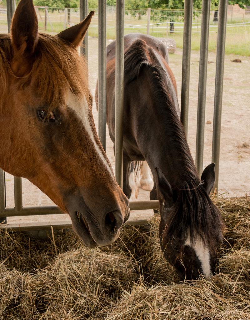 Lebenshof Tiermensch Heu-Rundballen für alle Tiere