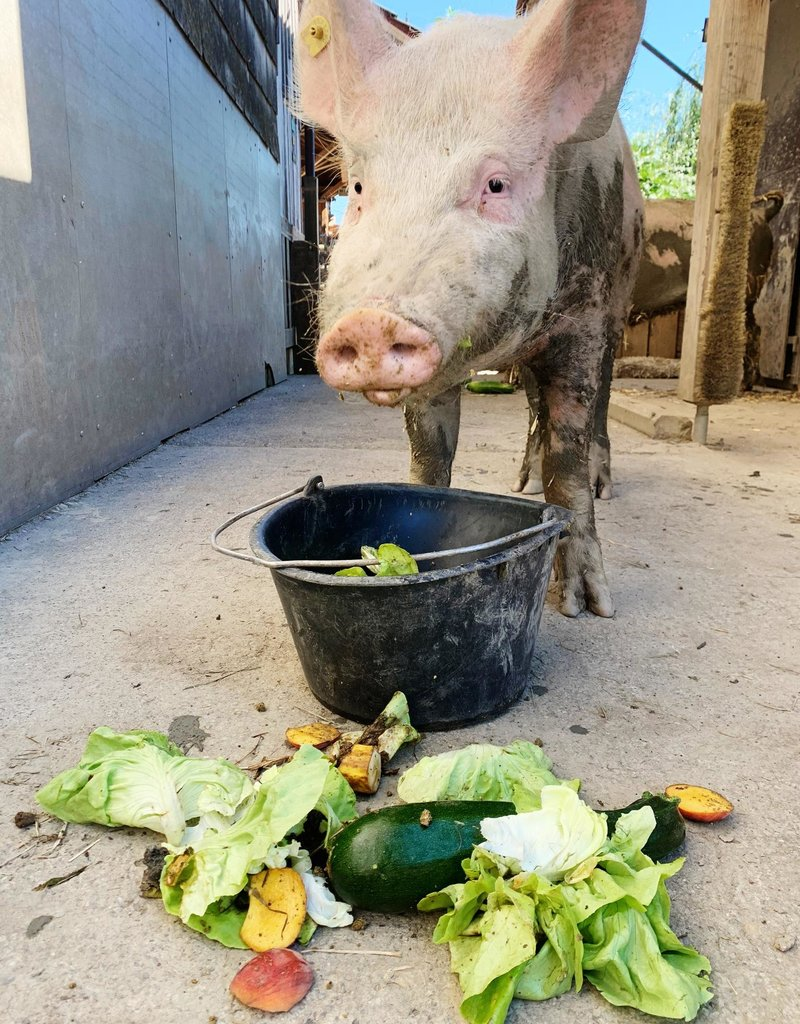 Lebenshof Tiermensch Hofbesuch für 10 Personen