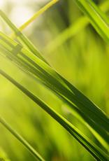 ELIXR Naturreines ätherisches Öl  - Lemongrass