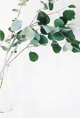 ELIXR Erkältungsset - Eucalyptus & Peppermint