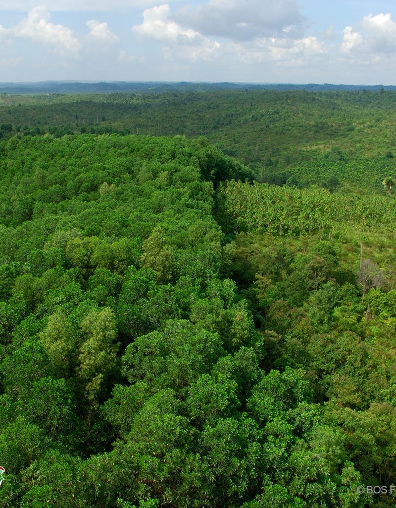 BOS Schweiz 10 Bäume pflanzen im Regenwald von Indonesien