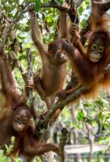 BOS Schweiz 5 Bäume pflanzen im Regenwald von Indonesien