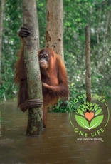 BOS Schweiz 1 Baum pflanzen im Regenwald von Indonesien