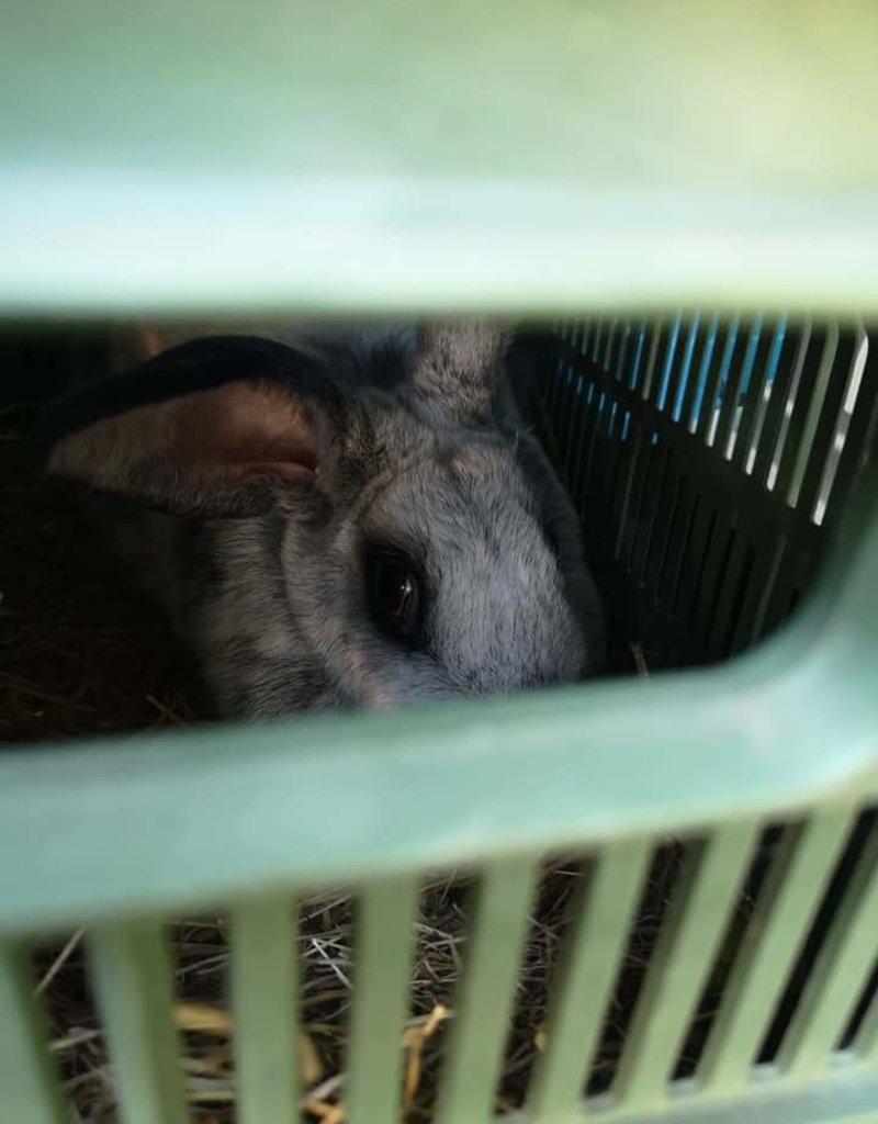 Lebenshof Tiermensch Kastration Kaninchen