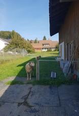 Lebenshof Tiermensch Weidepacht