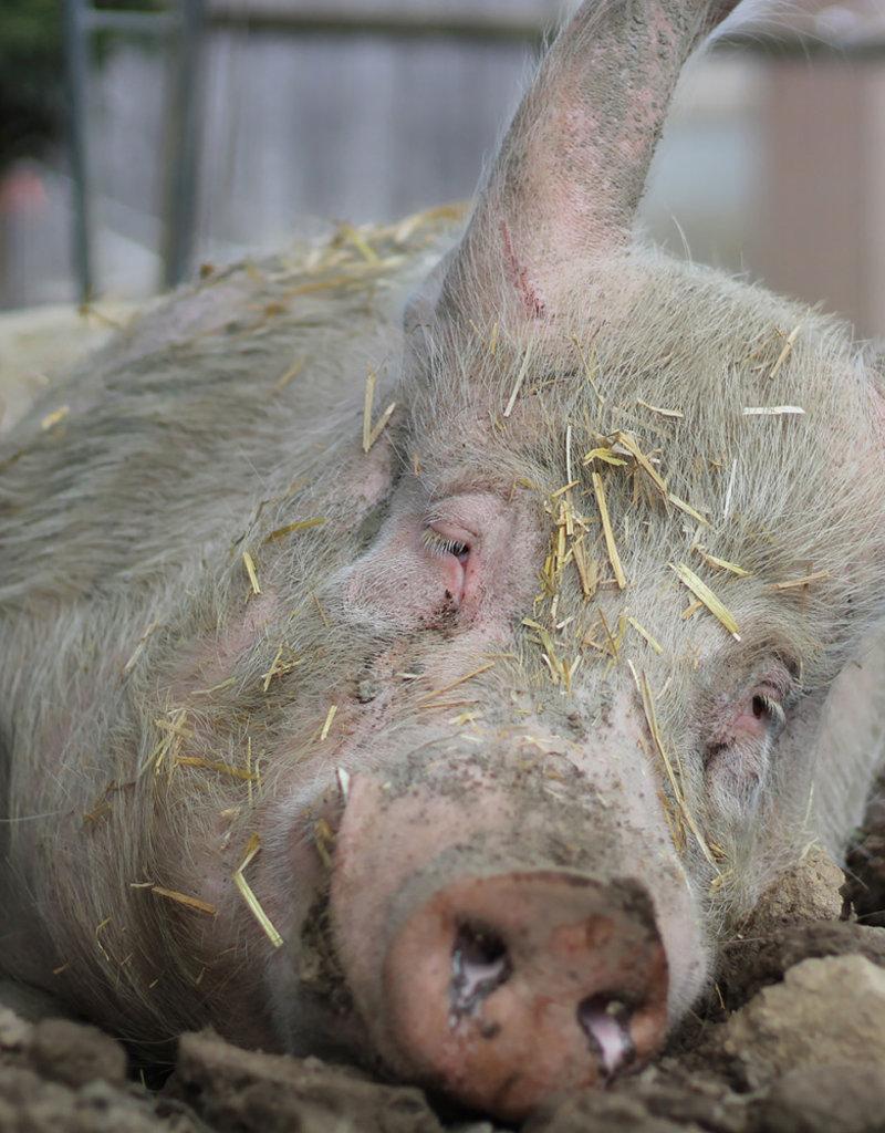 Lebenshof Tiermensch Medikamente für Momo
