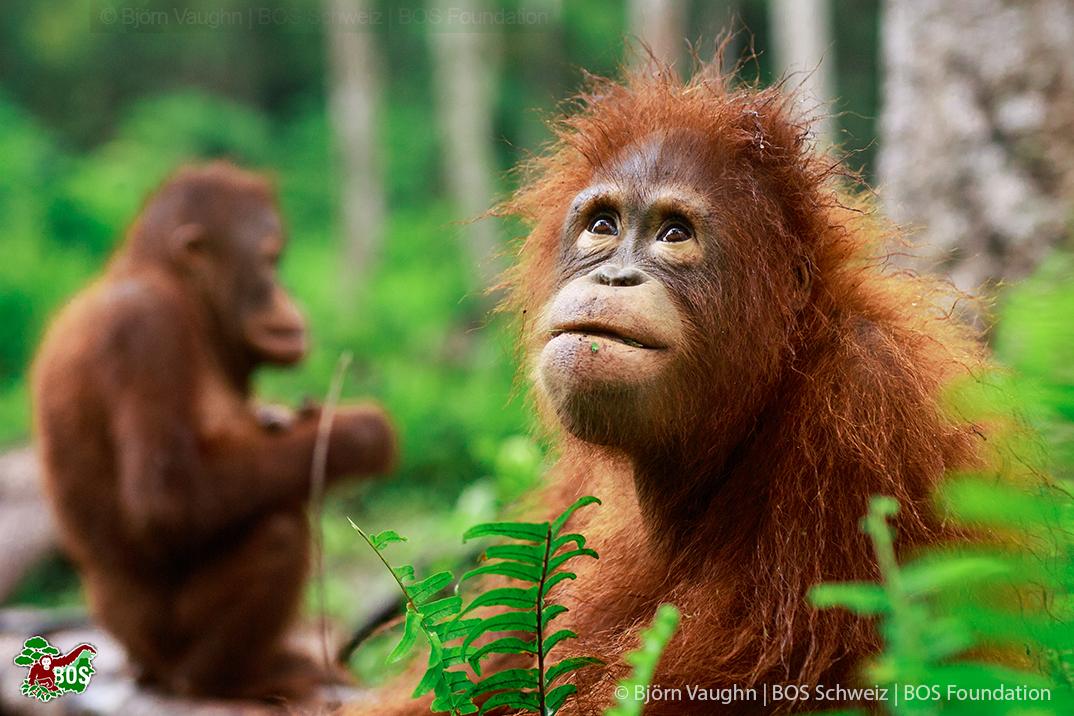 Aufforstung Regenwald