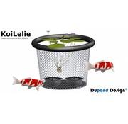 Dupond Design KoiLelie Large