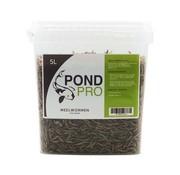 Pond Pro Pond Pro Meelwormen - 5 Liter Emmer