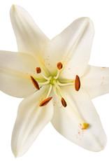 JANZEN Home Fragrance Sticks Skin 90 - JANZEN