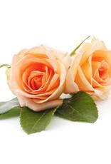 JANZEN Home Fragrance Sticks Orange 77 - JANZEN