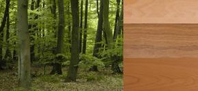 De verschillende houtsoorten