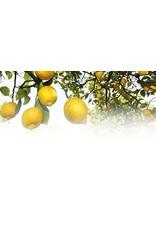 Weleda Deodoranten - Citrus deo roll-on