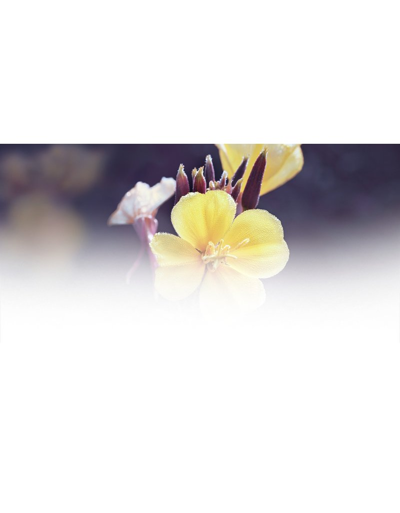 Weleda Lotions corporelles - Lotion au primrose