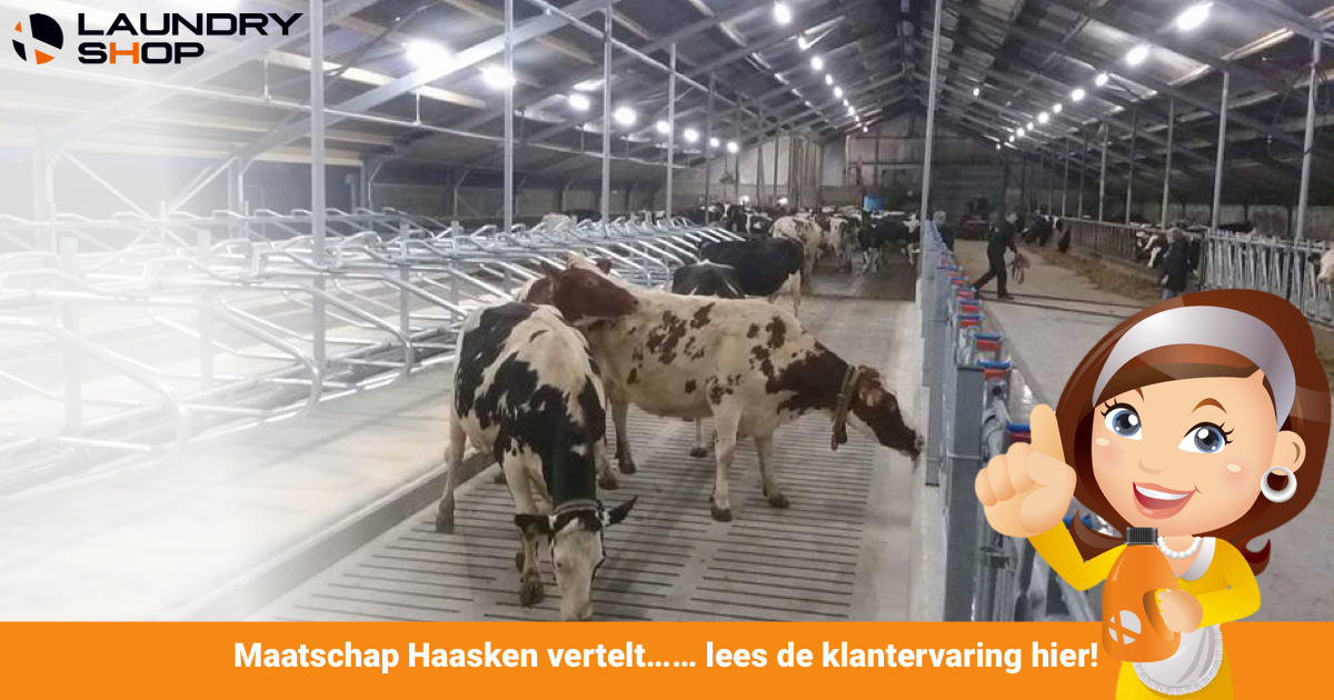 Maatschap Haasken vertelt ...