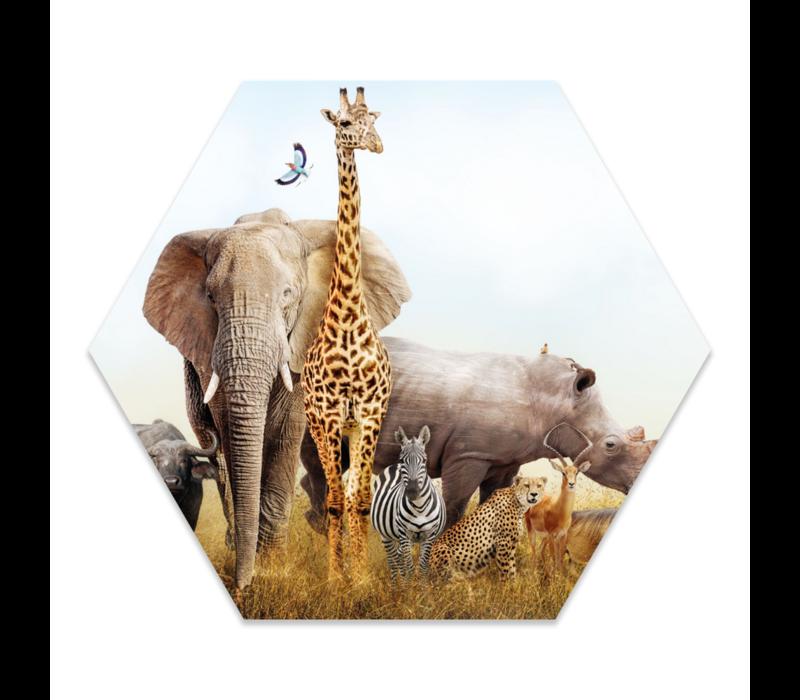 Muurhexagon kids | safari