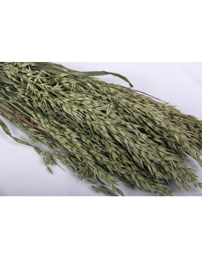 Dried oats - Avena - per bunch