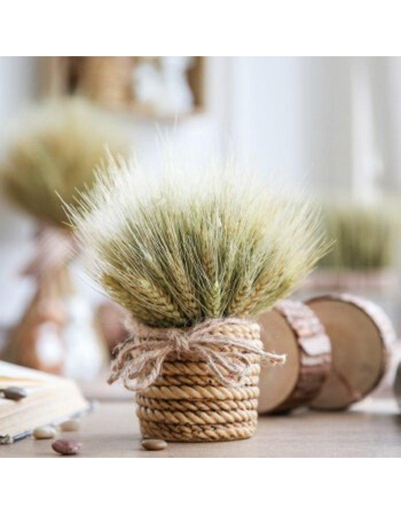 Dried barley - Hordeum - per bunch
