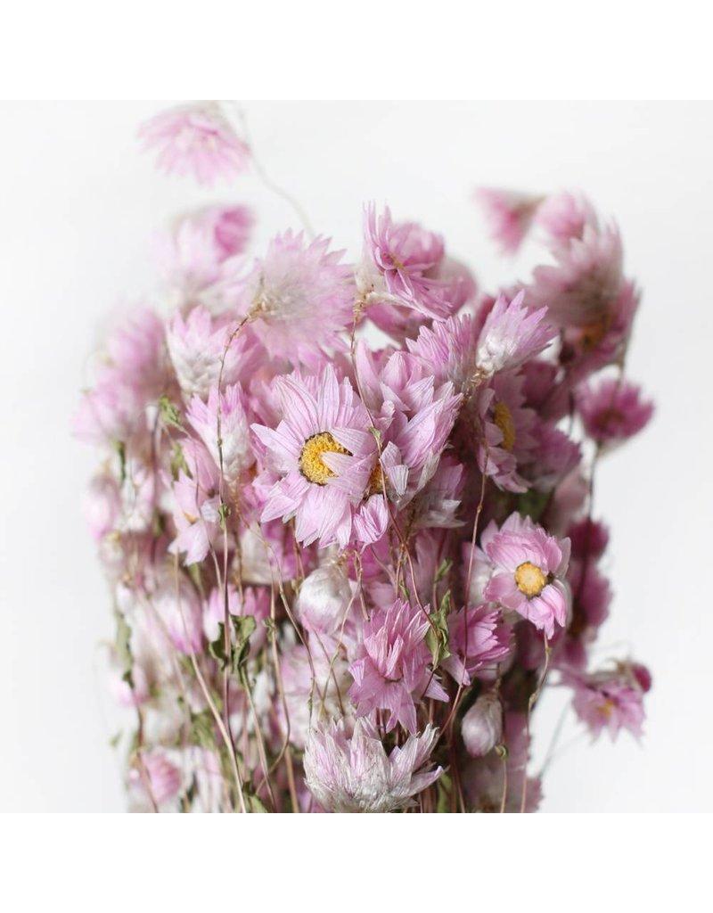 Droogbloemen - Gedroogde Rhodante - roze zonnestraal - per bos