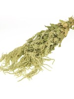 Kattenstaart - Amaranthus Caudatus Green