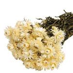 Droogbloemen - gedroogde strobloem - Helichrysum - Wit