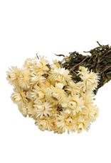 Dried flowers - dried straw flower - Helichrysum - White