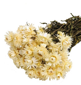 Dried flowers - dried straw flower - Helichrysum - White