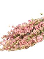 Trockenblumen - Getrockneter Rittersporn - Delphinium - Rosa