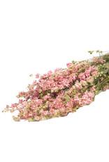 Droogbloemen - Gedroogde Ridderspoor - Delphinium - Roze - per bos