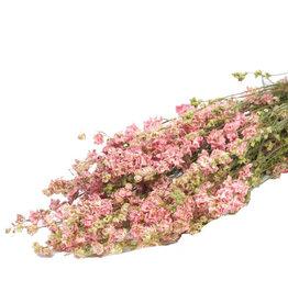 Droogbloemen - Gedroogde Ridderspoor - Delphinium - Roze
