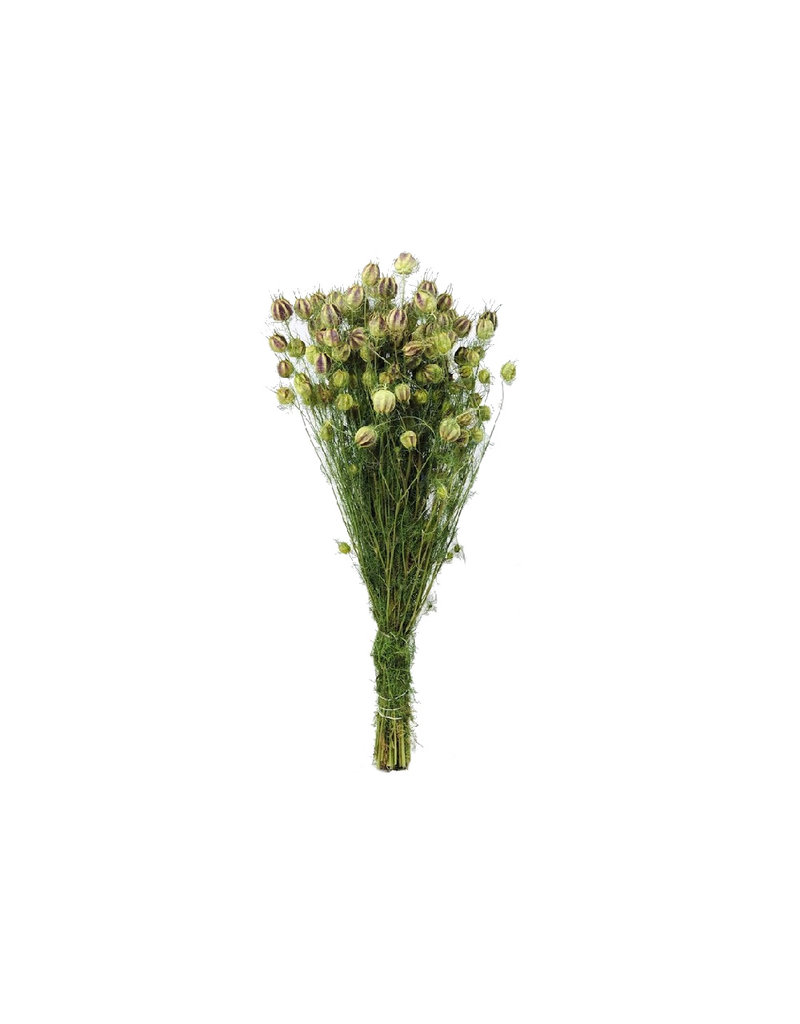 Dried flowers - dried Nigella - available per bunch