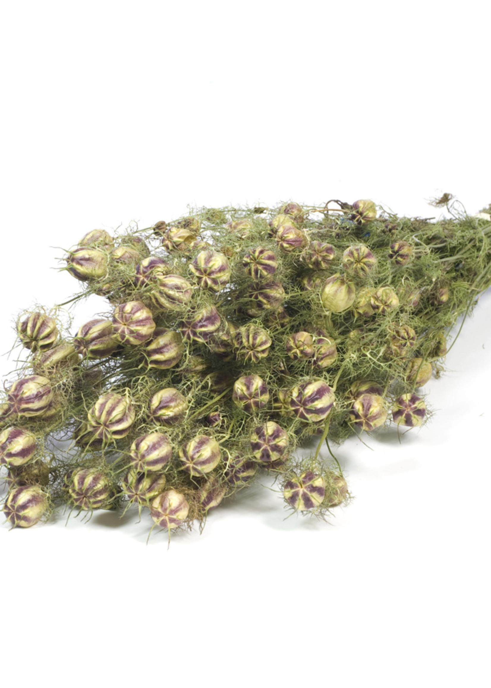Droogbloemen - gedroogde Nigella - per bos verkrijgbaar