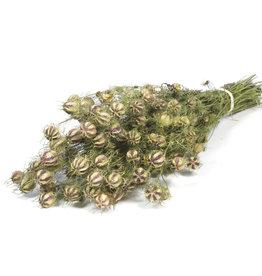 Trockenblumen - getrocknete Nigella