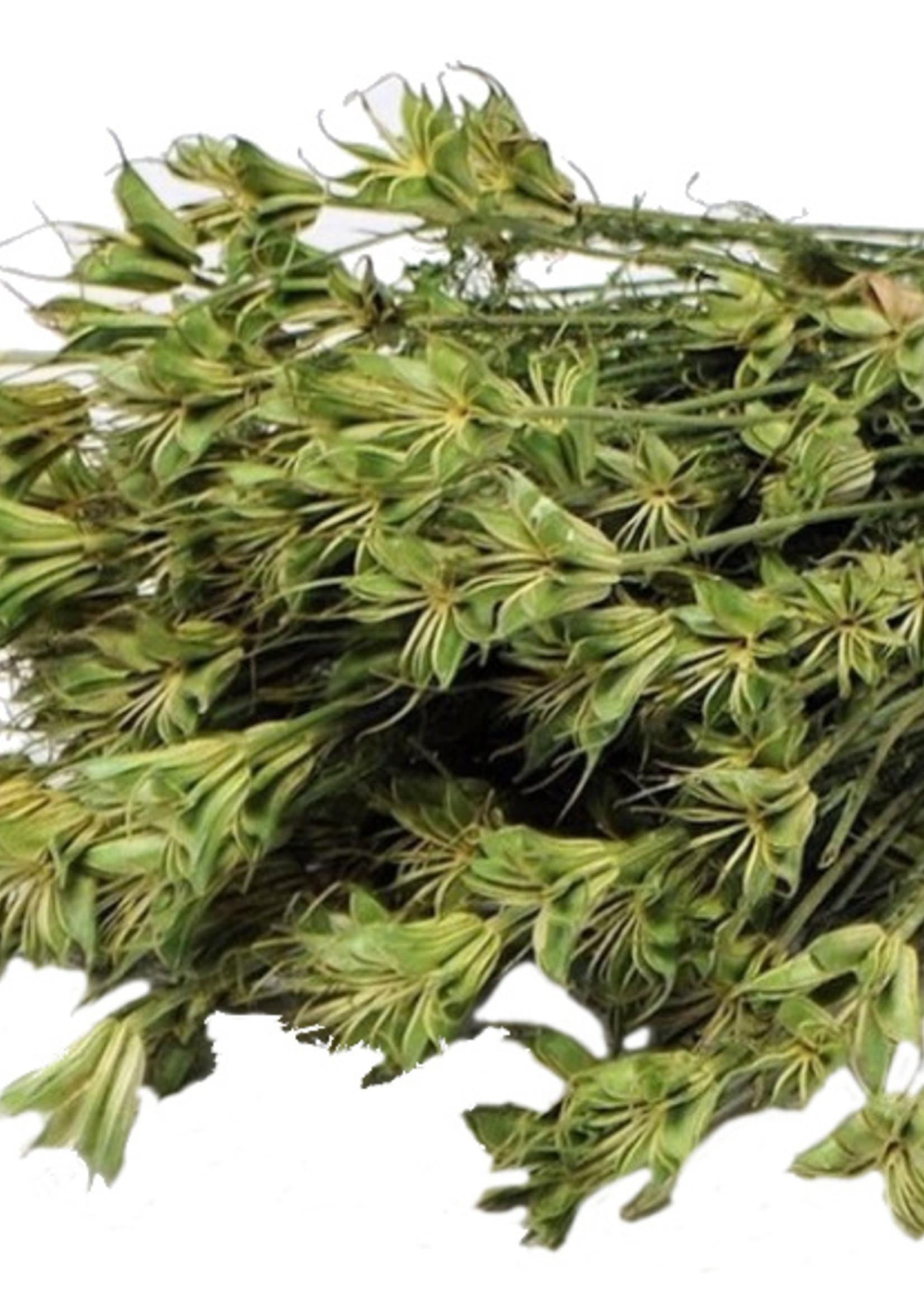 Gedroogde Nigella Orientalis - per bos