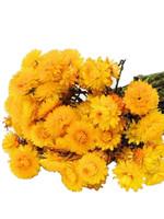 Droogbloemen - gedroogde strobloem - Helichrysum - Geel
