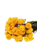 Dried flowers - dried straw flower - Helichrysum - Yellow
