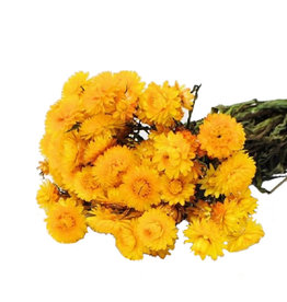 Dried flowers - dried straw flower - Helichrysum - Yellow