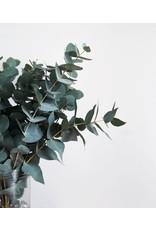 Bunch of Eucalyptus Cinerea 100 grams