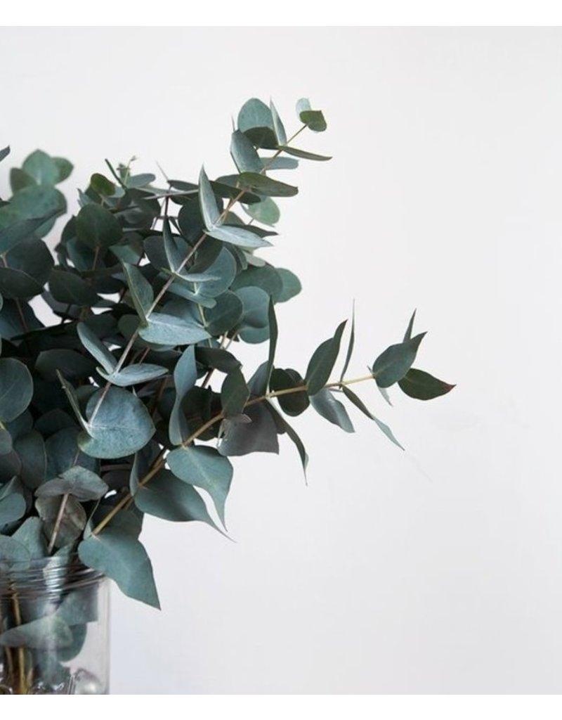 Bund Eukalyptus Cinerea 100 Gramm