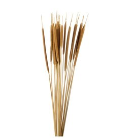 Dried Typha - Cane cigars per branch