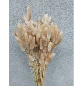 Dried flowers - Dried hare's tail - Lagurus Ovatus
