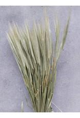 Getrocknete Körner; ein Bündel Weizen + ein Bündel Gerste + ein Bündel Hafer
