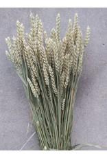 Gedroogde tarwe - Triticum - per bos