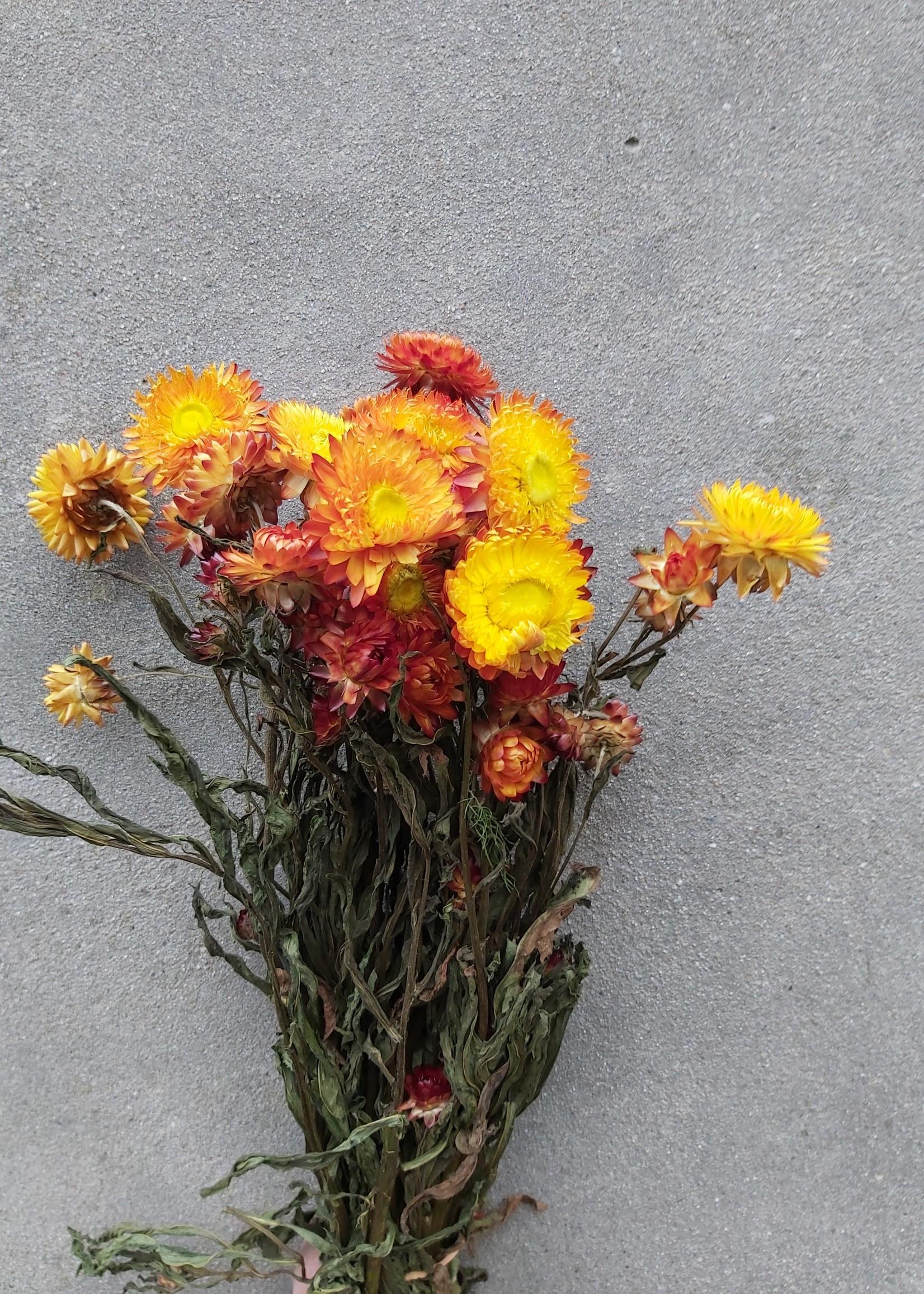 Droogbloemen - Gedroogde strobloem - Helichrysum - Oranje