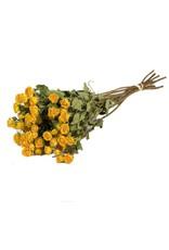 10 gedroogde gele rozen