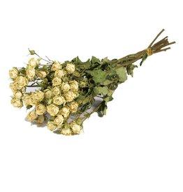 10 gedroogde witte rozen